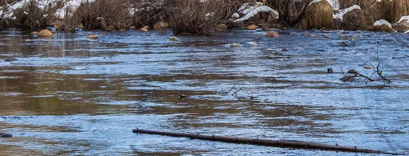 A river flowing through Yosemite. A large branch is floating in the foreground, with a snowy riverbank in the background.