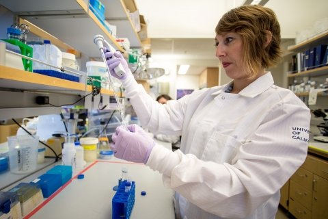 Professor Anna Beaudin is interested in the stem cells that form the human immune system.
