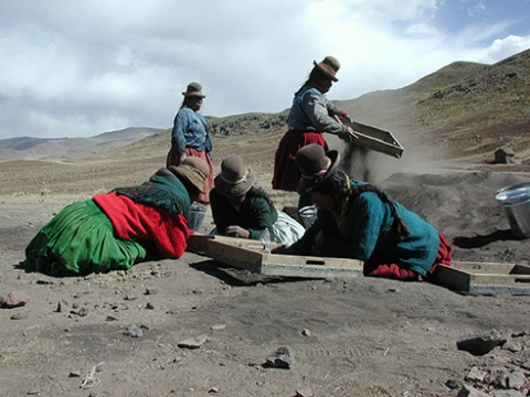 A group of communeros, or villagers, from Jachacachi, Peru, help excavate the site where evidence of potato domestication was found.