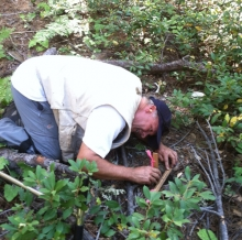 Professor Hart measures soil emissions in the Sierra.