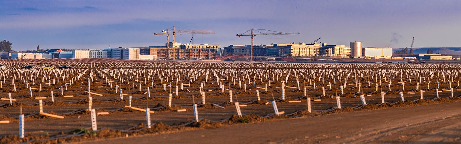 Uc merced a field of newly planted trees in the foreground with large construction project in the background fandeluxe Image collections